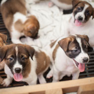 Charity welcomes new puppy trade recommendations