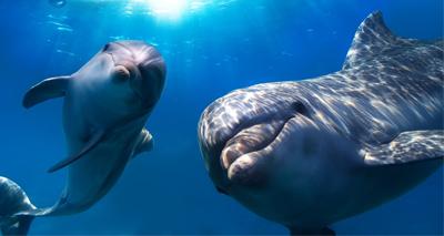 Signs of Alzheimer's found in wild dolphins