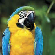 Huge fall in global bird trade since EU ban
