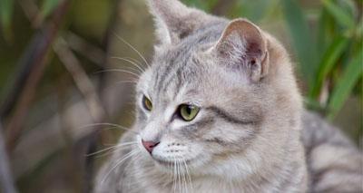 Understanding the adult cat's priorities
