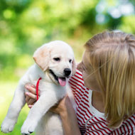 Puppy faeces needed to monitor antibiotic-resistant bacteria