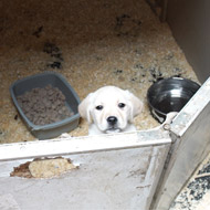 Puppy seller jailed for animal welfare offences