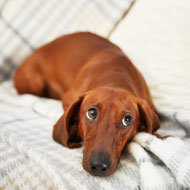 Draft bill to recognise animal sentience