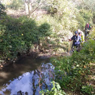 Poor water quality restricts Thames wildlife - ZSL