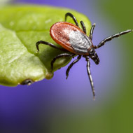 Project to tackle deadly tick-borne disease in India