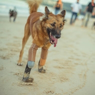 Dog becomes world's first to receive prosthetic blades