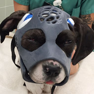 Vets create 3D-printed mask for injured puppy