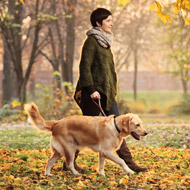 New cases of Alabama rot confirmed