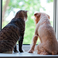 Study finds dogs are more intelligent than cats
