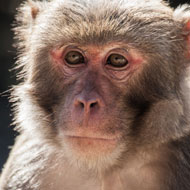 Macaques living in Florida park 'pose health threat'