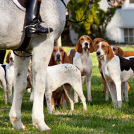 Cats missing after hunting hounds ran into sanctuary