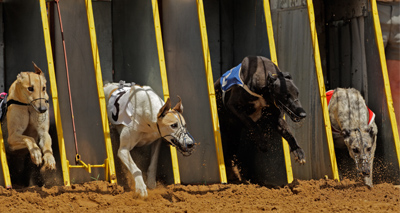 Petition launched to save greyhounds from Macau racetrack