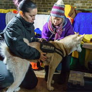 Mayhew vets lend support to the homeless