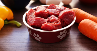 Raw diets 'pose risk to human and animal health'