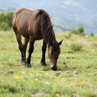Report shows significant fall in fly grazing