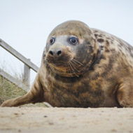 Seal surge prompts RSPCA to launch urgent appeal