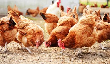 World's first human case of avian flu H7N4