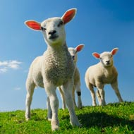 Late spring may increase disease risk for newborn animals