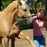 Horse Trust joins Animal Behaviour and Training Council