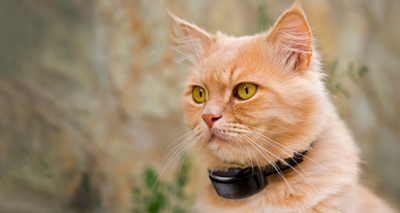 Electronic collars – a benefit to animals?