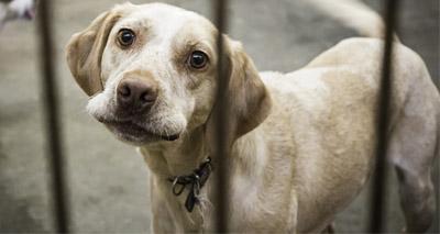 Scotland sees huge rise in animal cruelty seizures