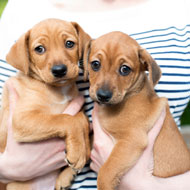Vet pleads guilty to illegally importing puppies