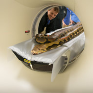 US vets perform pioneering CT scan on a python