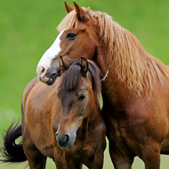 Saliva test shown to reduce anthelmintic use in horses