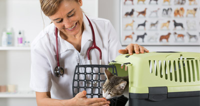 Pets Need Vets campaign launched