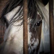 Horse crisis reaches four-year high