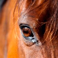 Equine charities sign Memorandum of Understanding