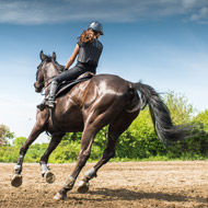 Riding styles can affect movement and lameness