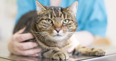 Feline charities launch preventative healthcare campaign
