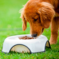 Battersea calls for clarity on animal cruelty sentences