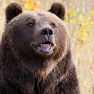 Animal welfare groups condemn footage of performing bear