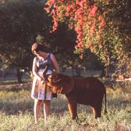 Wildlife conservationist Daphne Sheldrick dies aged 83