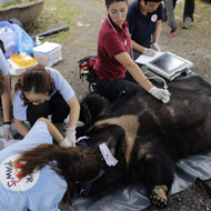 Vets rescue 'bile bears' from a lifetime of suffering