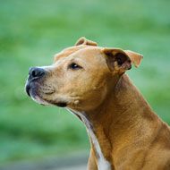 MPs launch inquiry into dangerous dog laws