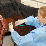 Vigilance urged in France amid equine herpesvirus outbreaks