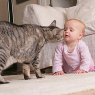 Campaign to help 'kids and kitties' live in harmony