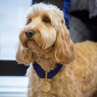 Top medal for dog who saved young boy's life