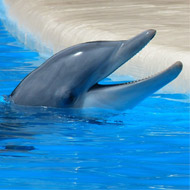 Captive dolphins 'anticipate' human interaction