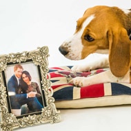 Homeless pets sing for royal couple