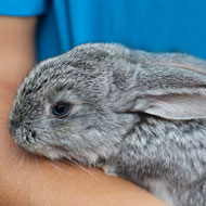 New study sheds light on rabbit handling