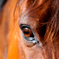 Concern over use of bits in royal horses' mouths