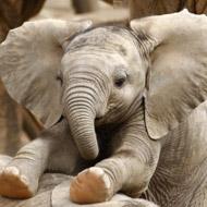 Sanctuary to rehabilitate 'unemployed' elephants