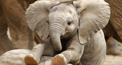 Sanctuary to rehabilitate 'unemployed' elephants