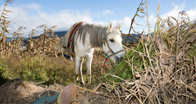 Equine charities welcome agreement with OIE