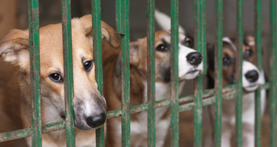 South Korean court rules against killing dogs for meat