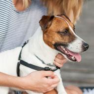 Dog-human transmission of NDM bacteria